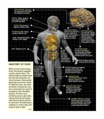 Anatomy of fear